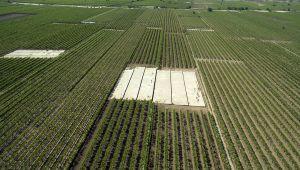 Alaşehir Ovası'nı çoşturacak proje: Üreticiye her yıl 150 milyon lira