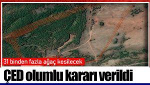 31 binden fazla ağaç kesilecek